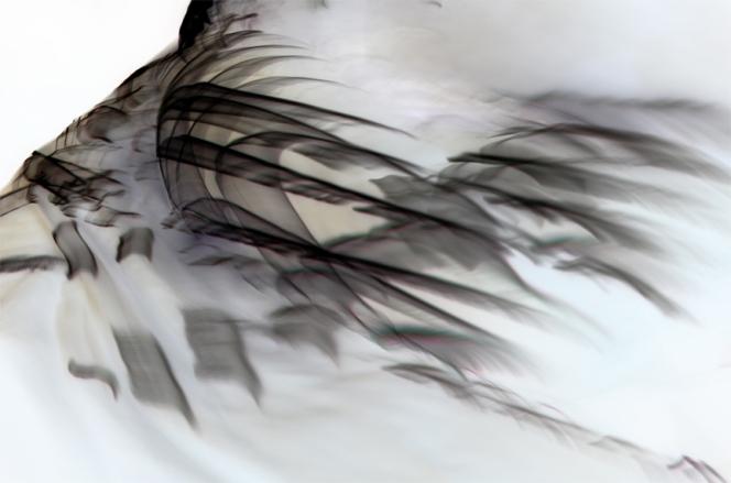 Bojana Ginn, Liquid Lines 1